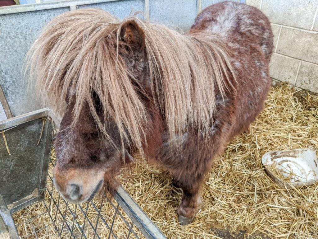 Blaze Farm pony